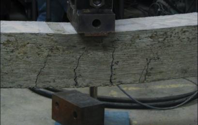 Еластичен бетон инспириран од морски ежови
